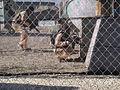 Call of Duty XP 2011 - paintball battle in the Scrapyard (6125257469).jpg