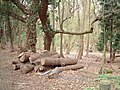 Callow Hill Wood - geograph.org.uk - 156523.jpg