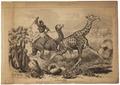 Camelopardalis giraffa - 1700-1880 - Print - Iconographia Zoologica - Special Collections University of Amsterdam - UBA01 IZ21600149.tif