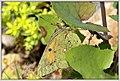 Camouflage III (34737320522).jpg