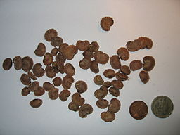 Camucamu seeds