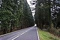 Carretera de Cruceta - panoramio.jpg
