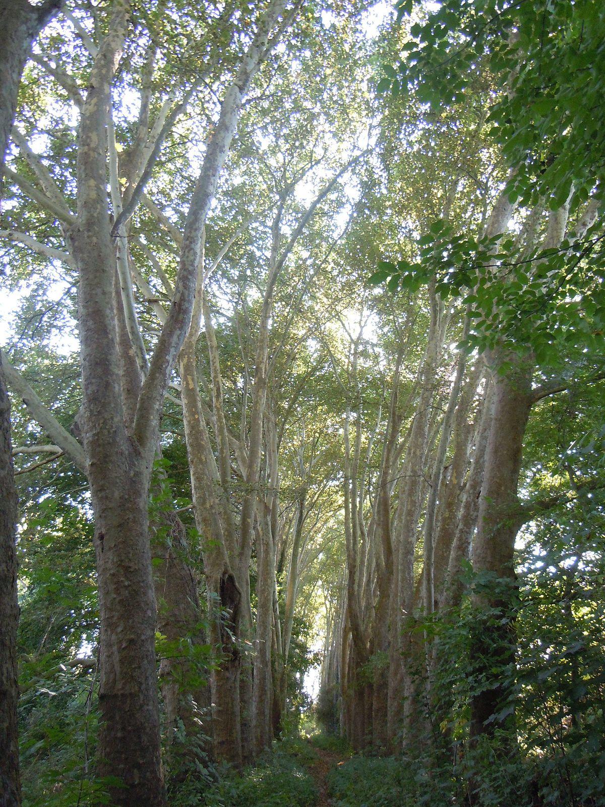 Zone agricole de carri res sous bois les flageaux wikip dia for Adresse piscine saint germain en laye