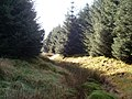 Carsgailoch Spring - geograph.org.uk - 1516279.jpg