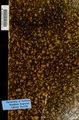 Catálogo I. Diversos de Castilla (Cámara de Castilla.) (IA catlogoidivers00arch).pdf