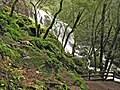 Cataract Falls is just below Laurel Dell on the northern flank of Mt. Tamalpais. - panoramio.jpg
