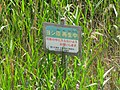 Caution in Reed bed of Fujimae-higata.jpg