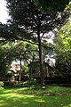 Cedar at the former residence of Zhou Enlai (20151003132625).jpg