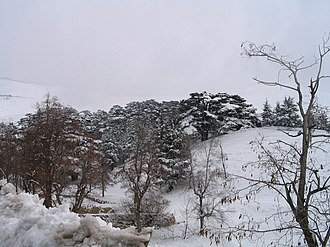 Western Asia - A Lebanese Cedar Forest in winter
