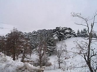Western Asia - A Lebanese Cedar Forest in winter