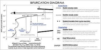 Cellular model - Image: Cell cycle bifurcation diagram