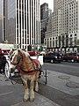 Central Park, New York, NY, USA - panoramio (2).jpg
