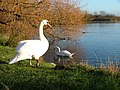 Charlton's Pond Nature Reserve - geograph.org.uk - 90442.jpg