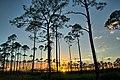 Charlton County, GA, USA - panoramio (8).jpg