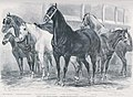 Chevaux Plouénan 1873.jpg