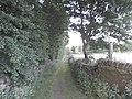 Chicken Lane, Norland - geograph.org.uk - 1931403.jpg