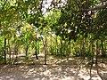 Chitgar Park - panoramio (3).jpg