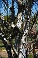 City of London Cemetery Memorial Garden tree branch bark 1.jpg