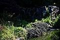 City of London Cemetery Terrapin pond 07.jpg