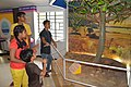 Clap Tree - Fun Science Gallery - Digha Science Centre - New Digha - East Midnapore 2015-05-03 9989.JPG
