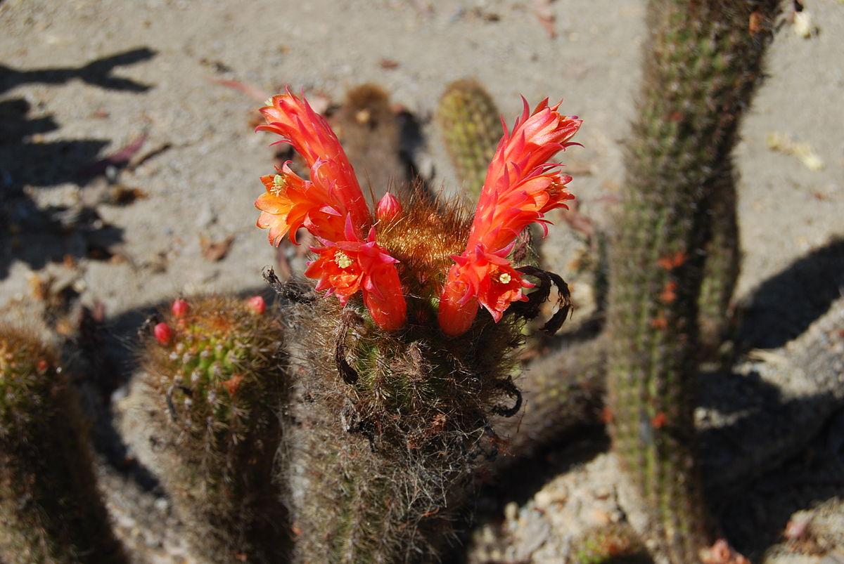 The new cactus lexicon