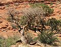 Closeup of dead tree on Park Avenue in Arches NP.jpeg