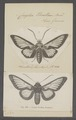 Cocytia - Print - Iconographia Zoologica - Special Collections University of Amsterdam - UBAINV0274 060 03 0056.tif