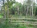 Coed Allt Goch woodland - geograph.org.uk - 1004889.jpg