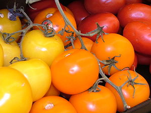 Colorful Red and Yellow Tomatoes 2816px.jpg