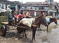 Communication and Poverty-Meghalaya.jpg