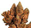 Copper-185407.jpg