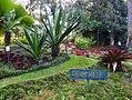 Costa Rica DSCN2766-new (30762135480).jpg