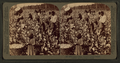 Cotton is king - A plantation scene, Georgia, by Underwood & Underwood 3.png