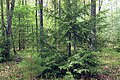 Cranberry Swamp Natural Area (27) (18098831072).jpg
