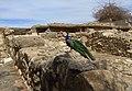 Crete Knossos.jpg