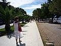 Crikvenia - pálmafák-palmy-palm street - panoramio.jpg