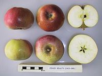 Cross section of Emilia, National Fruit Collection (acc. 1957-193).jpg