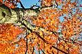 Cuyahoga Valley National Park (10355661323).jpg