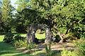 Düsseldorf Benrath - Schlosspark - Englischer Garten 02 ies.jpg