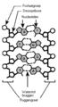 DNA structuur1 200.png