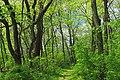 Dale's Ridge Trail (13) (17538946845).jpg