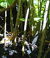 Daniel Pavon Cuellar Mini Forest 2017.jpg