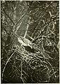 De jacht met de camera; (1909) (20847029565).jpg