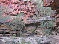 Deadcock-Den-on-Woolshed-Creek1.jpg