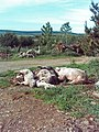Death at Lazyfold farm - geograph.org.uk - 451354.jpg