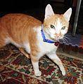 Defiant Kitten.jpg