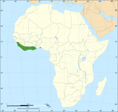 Dendroaspis viridis distribution map.png