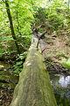 Detmold - 2014-05-05 - NSG LIP-015 - Hasselbach unterhalb Donoperteich (29).jpg