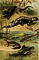 Deutschlands Amphibien und Reptilien (1890) (20888497735).jpg
