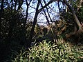 Devonshire Road Rock Gardens - panoramio (5).jpg